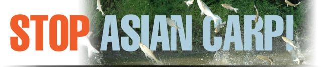stop-asian-carp-banner-4-0